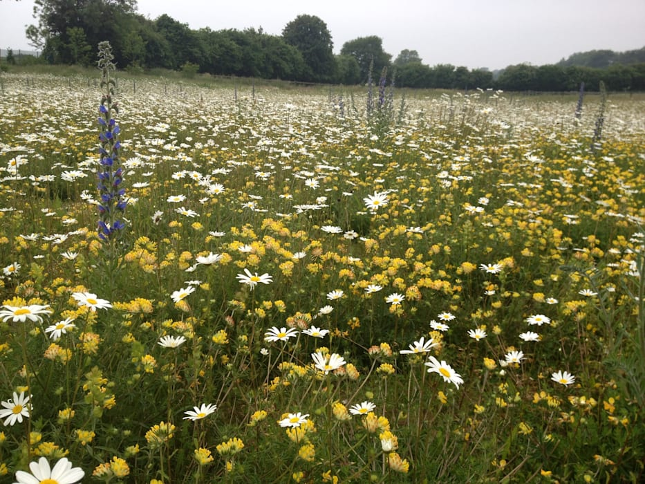 Wild-flower meadow Country style garden by Roeder Landscape Design Ltd Country