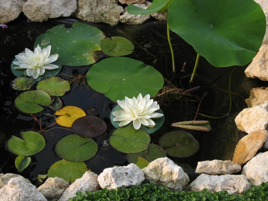 Mediterranean style garden by Giuseppe Maria Padoan bioarchitetto - casarmonia progetti e servizi Mediterranean