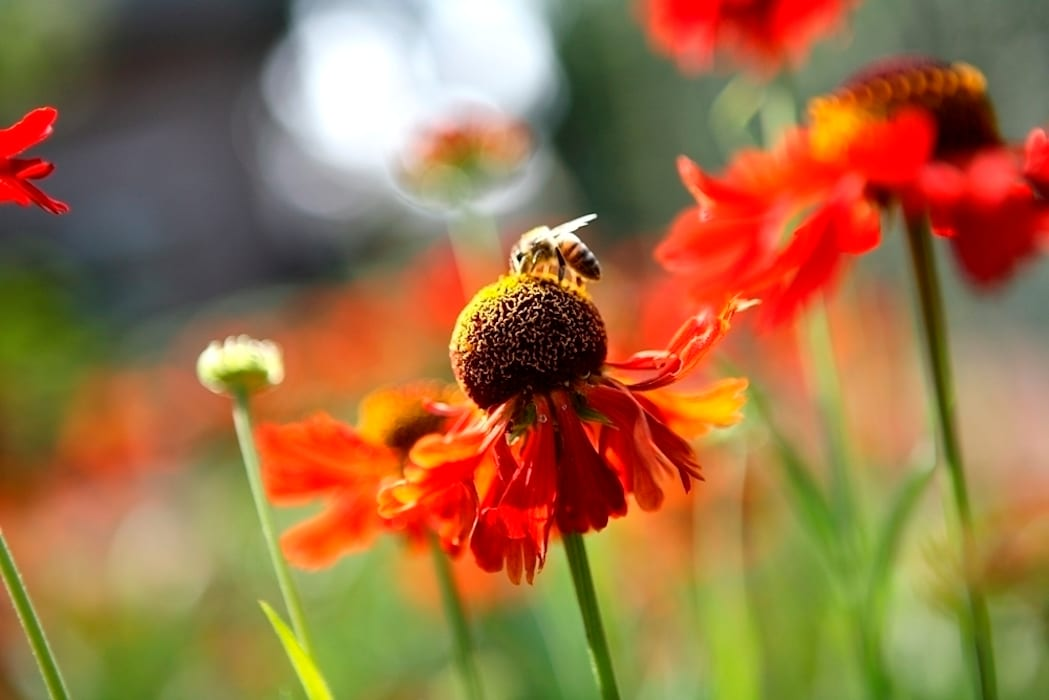 Nature rich garden good for bees and other insects/ Natuurrijke landschapstuin met bloemrijke beplanting goed voor bijen ea. insecten. :  Garden by FLORERA , design and realisation gardens and other outdoor spaces.