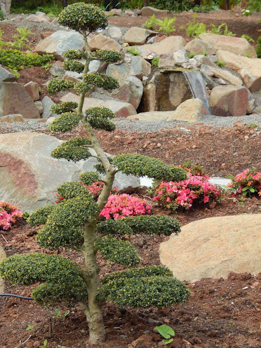 asiatischer Garten:  Garten von jwgartendesign
