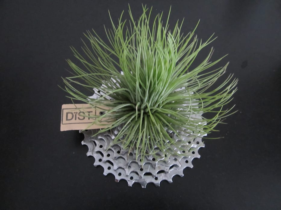 Dïst Airplant Pion:  Serre door Dïst Dutch Design
