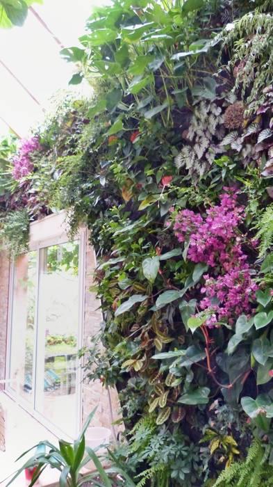 Mur végétal intérieur VERTICAL FLORE: Jardin d'hiver de style  par Vertical Flore