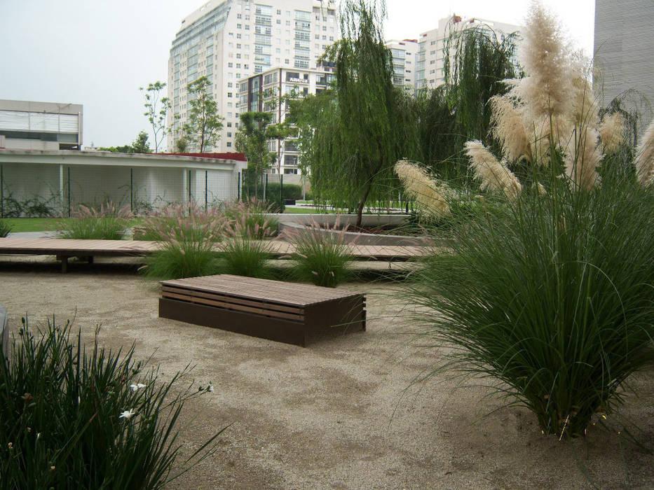 Pennisetums y lirios persas. : Jardines de estilo  por KVR Arquitectura de paisaje, Moderno