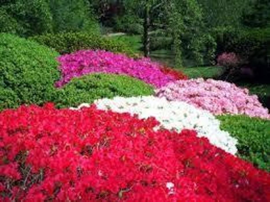 CanlıBahçe Fidancılık – açelya:  tarz Bahçe