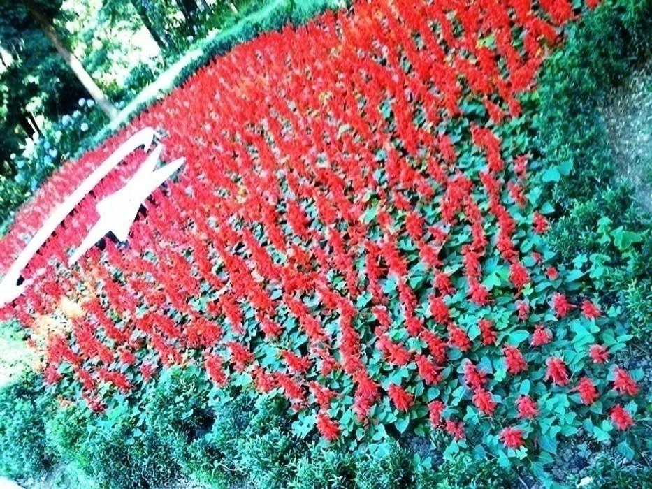 ateş çiçeği www.yalovasufidan.com Akdeniz Okullar yalova su fidancılık çiçekçilik peyzaj ithalat ihracat ltd. şti. Akdeniz