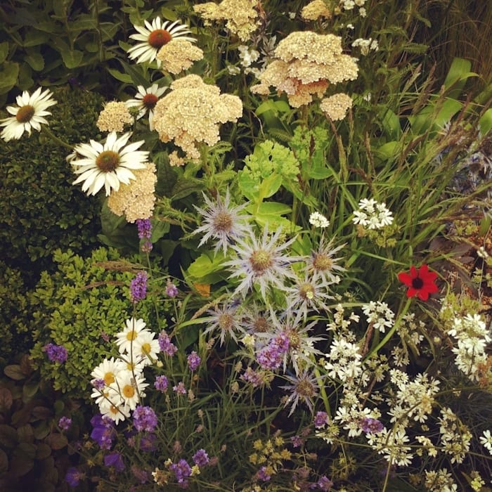 Planting in border Eclectic style event venues by Juniperhouse Eclectic