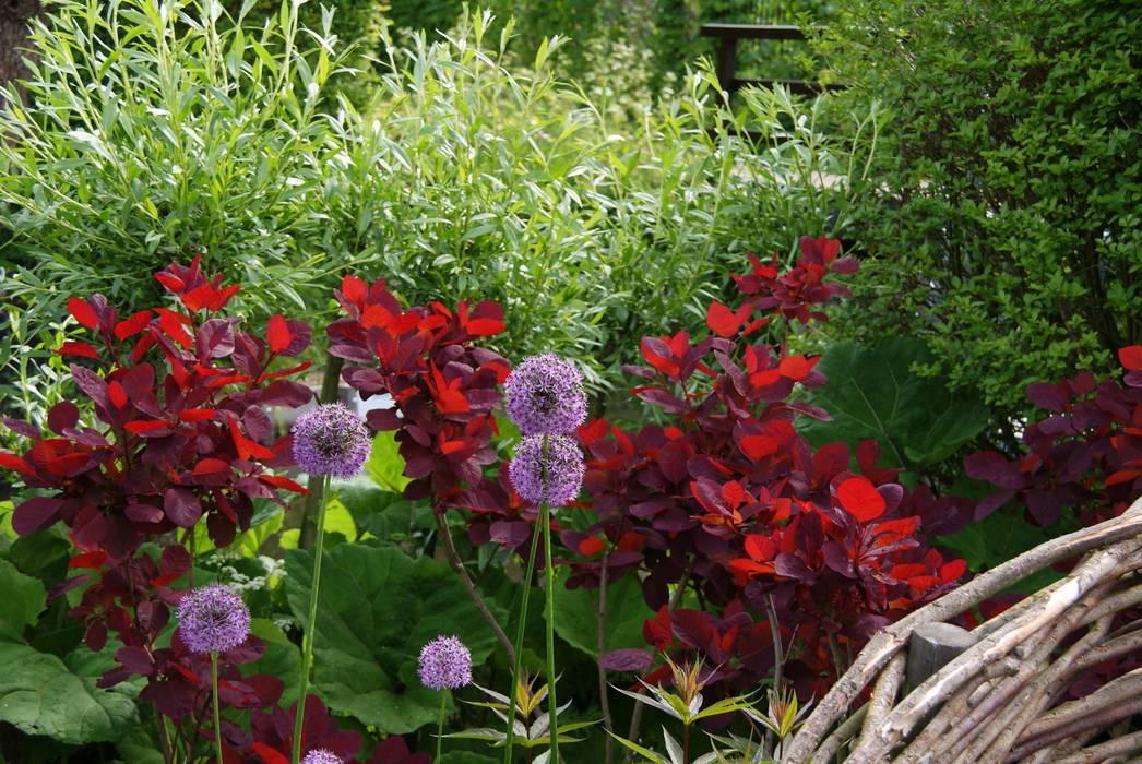 Kleur en vorm:  Tuin door Ontwerpstudio Angela's Tuinen, Modern