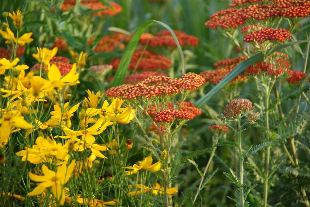Warm:  Tuin door Ontwerpstudio Angela's Tuinen, Modern