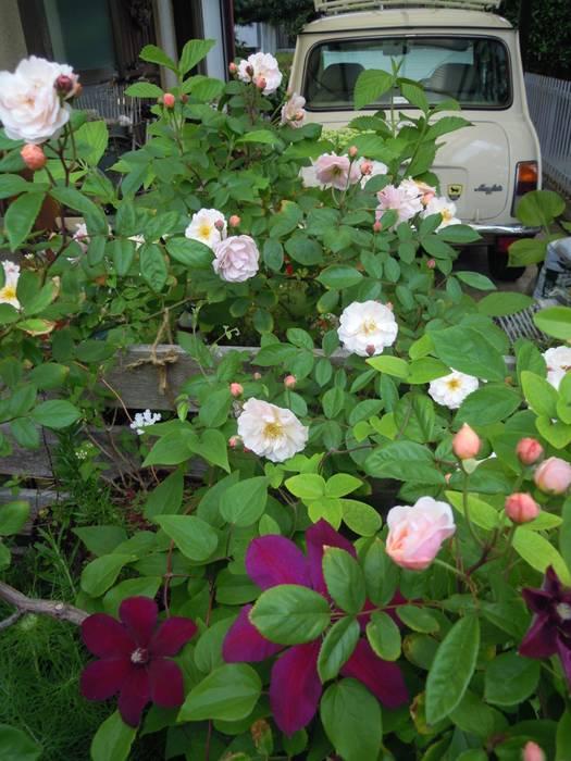 クレマチスとバラ green team co クラシカルな 庭