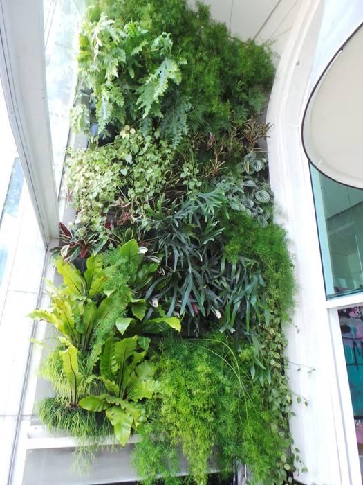 Jardim vertical Jardins tropicais por homify Tropical