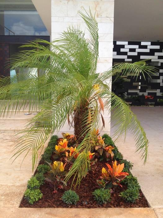 Casa Z-26. Jardín pequeño en acceso: Jardines de estilo  por EcoEntorno Paisajismo Urbano,