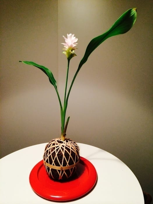 temari WIND FROM ASIA Hôtels asiatiques par Lovely Life Design Asiatique