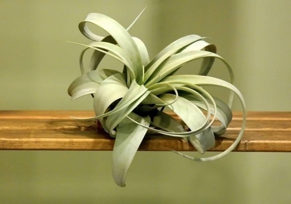 de estilo tropical por bitki dekor, Tropical