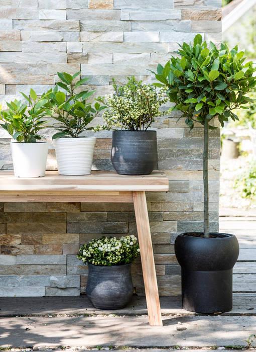 Jardin classique par Pflanzenfreude.de Classique