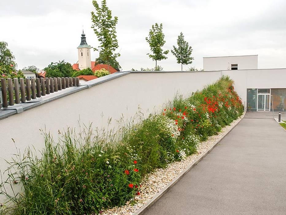 Begrunte Wand Schulen Von Kraftner Landschaftsarchitektur