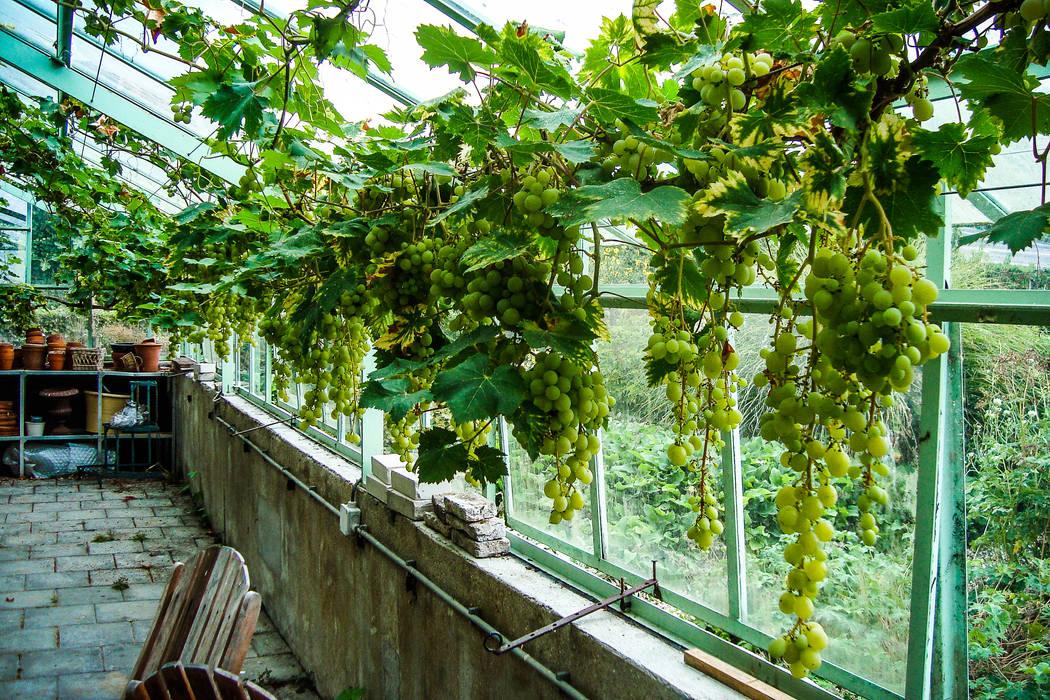 groenpartners Garden Greenhouses & pavilions