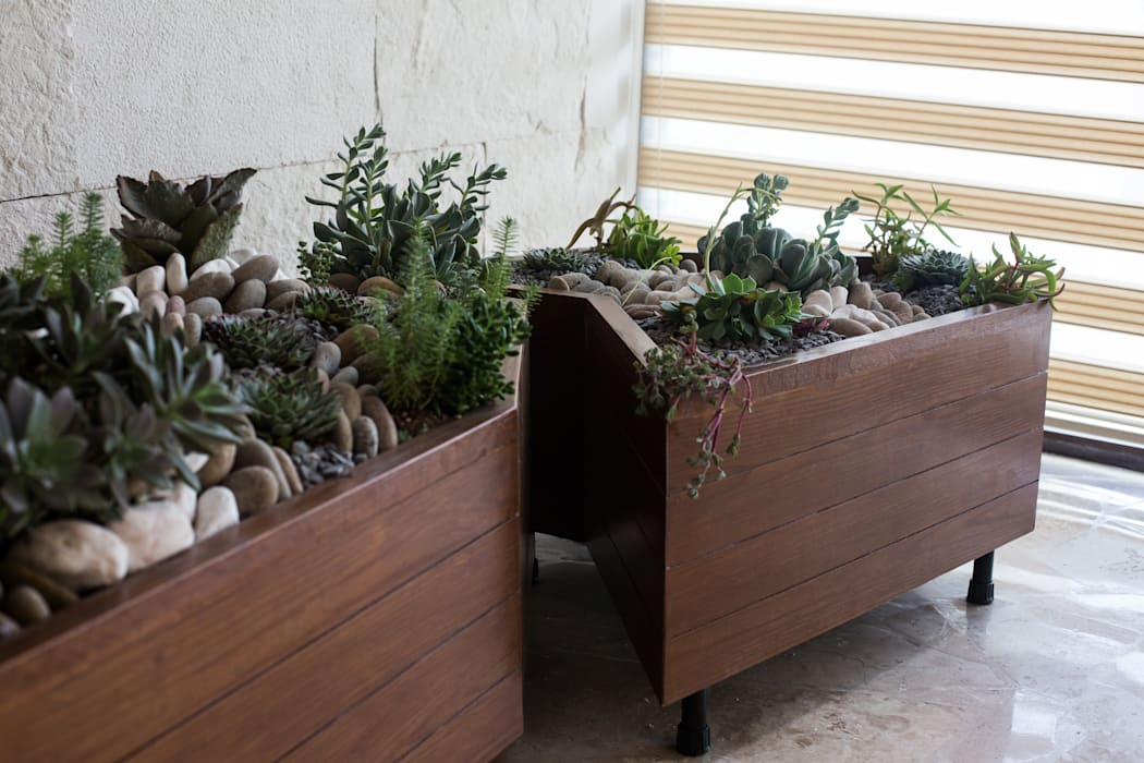 Diseño de mini jardín interior. Dovela Interiorismo Paisajismo de interiores Madera Acabado en madera