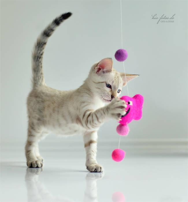 por stylecats® Moderno