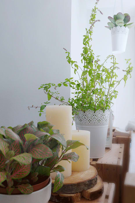 Une séparation végétale et originale: Chambre de style  par Skéa Designer