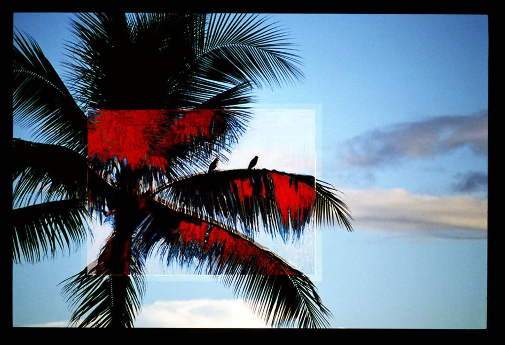 Palmier aux oiseaux: Salon de style  par ahgraph