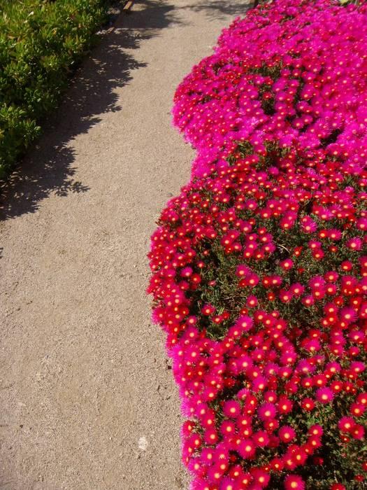 Jardines de estilo mediterráneo de Atelier Jardins do Sul Mediterráneo