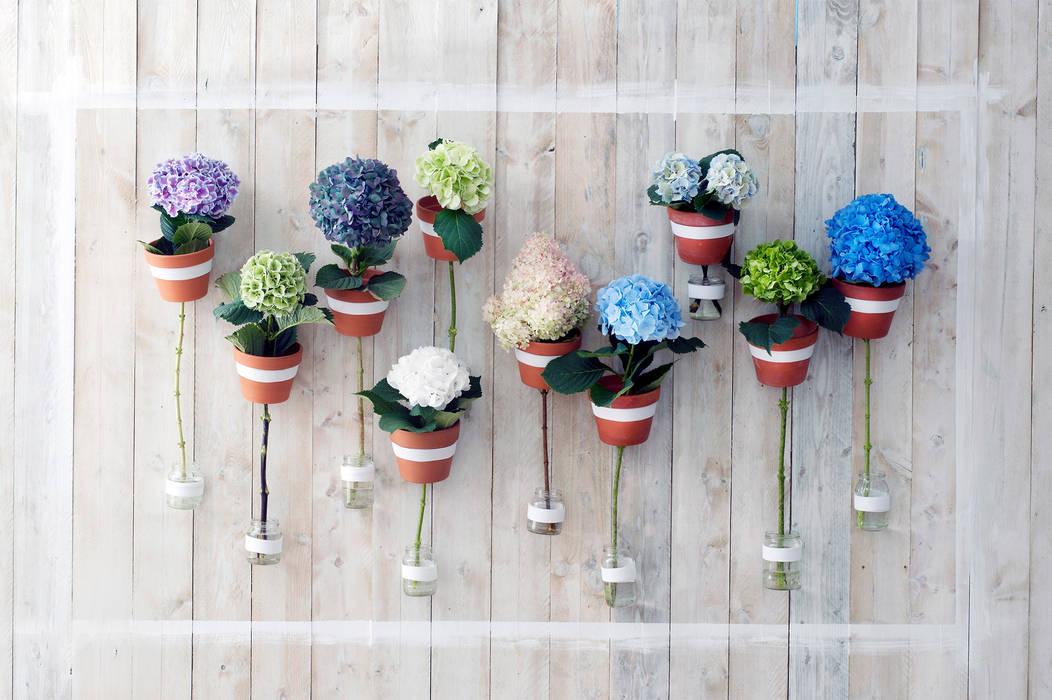 Die schöne Hortensie blüht in vielen Farben Moderne Wohnzimmer von Tollwasblumenmachen.de Modern