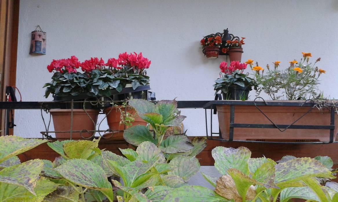 immobiliare sublacense Balconies, verandas & terraces Plants & flowers