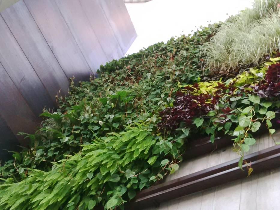 Moderner garten von terapia urbana, diseño de jardines verticales ...