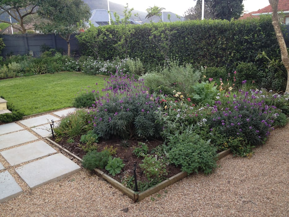 Herbaceous Border Bed:  Garden by Red Daffodil