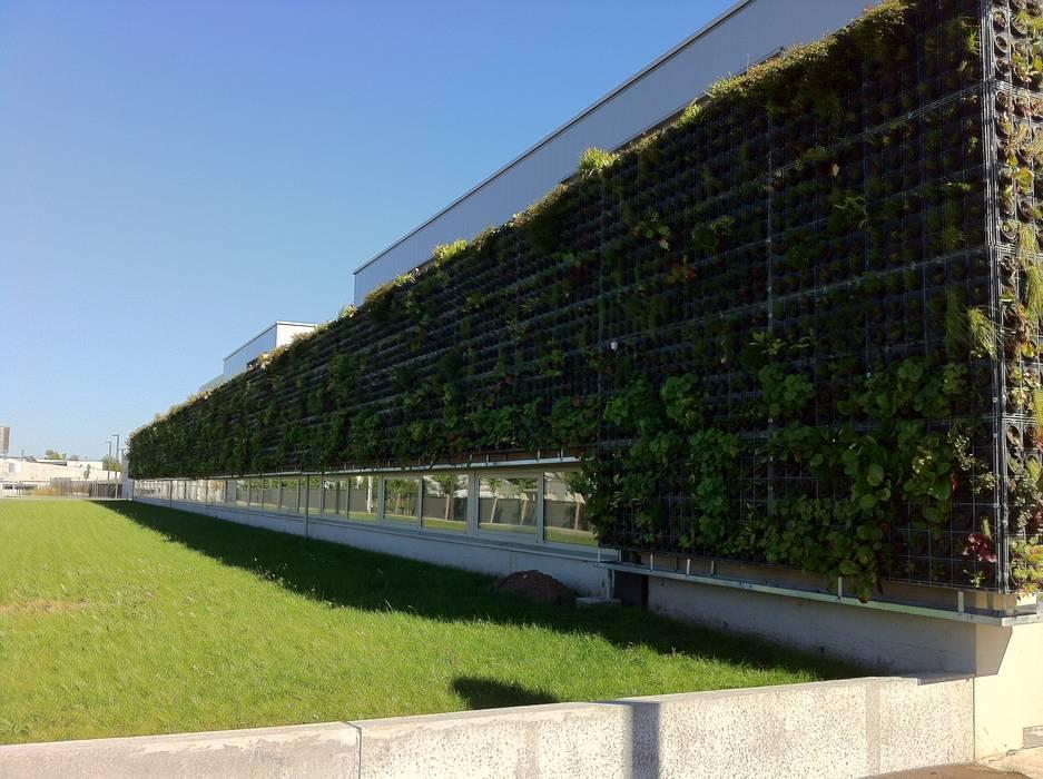 Façade végétalisée / Mur végétal extérieur VERTICAL FLORE: Maisons de style  par Vertical Flore