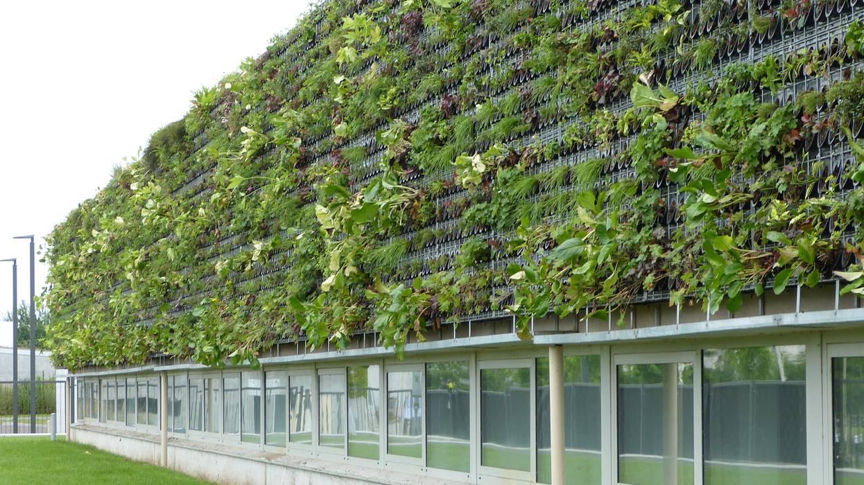Fa ade v g talis e mur v g tal ext rieur vertical flore maisons de style par vertical flore - Mur exterieur maison ...