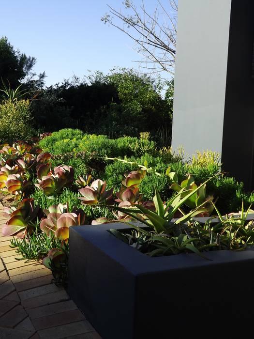 Jardin moderne par Simon Clements: Garden & Landscape Design Moderne
