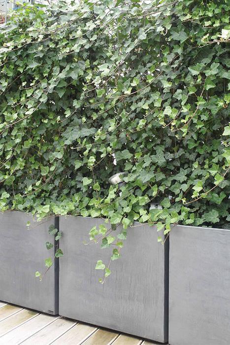 Jardinière image\'in en brise vue avec lierre grimpant sur treillis ...