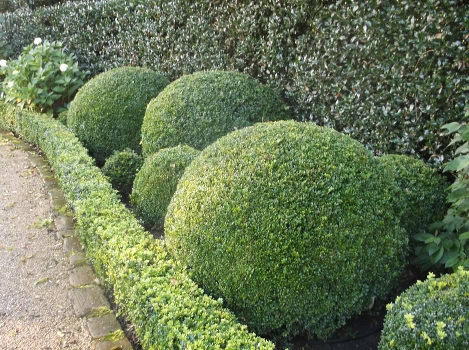 A Bowdon Garden:  Garden by Charlesworth Design