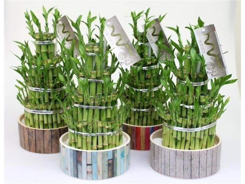Châu Á  theo Perfect Plants Ltd, Châu Á Chất xơ tự nhiên Beige