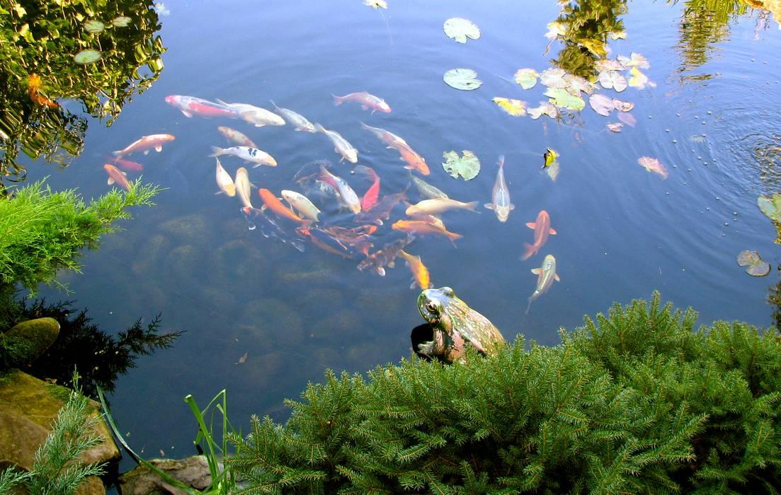 Водный объект: Сады в . Автор – Укр Ландшафт Парк,
