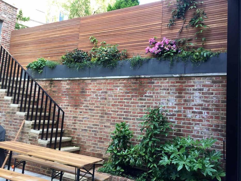 Clematis armandii from raised bed Jane Harries Garden Designs