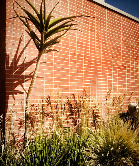 Simple yet effective feature wall - gentle grasses and tree aloe with stature Acton Gardens Country style house