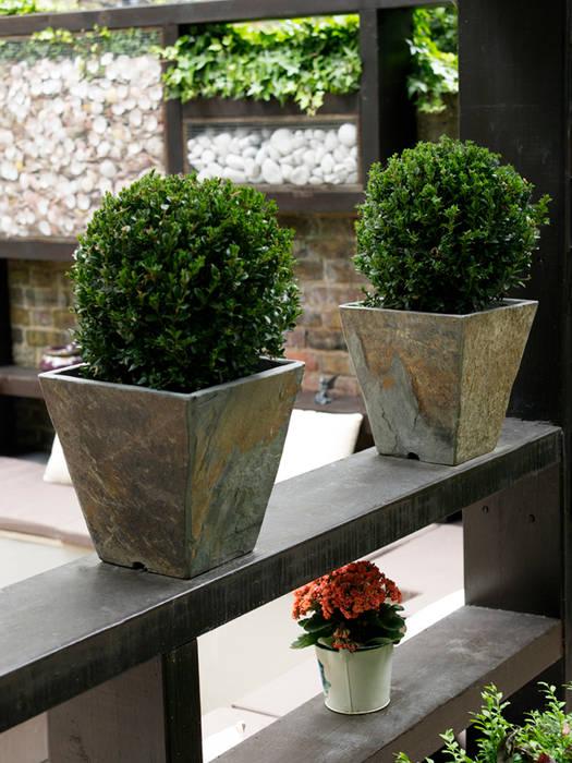 Box hedge in slate pots:  Garden by Earth Designs