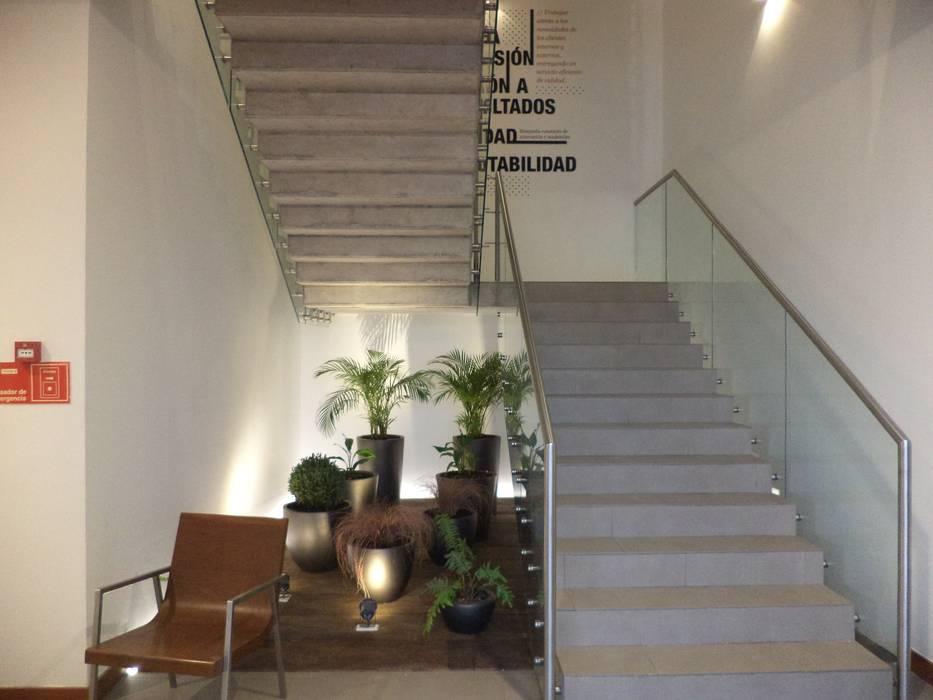 HABILITACION OFICINAS INALEN- ENEA: Jardines con piedras de estilo  por AOG SPA