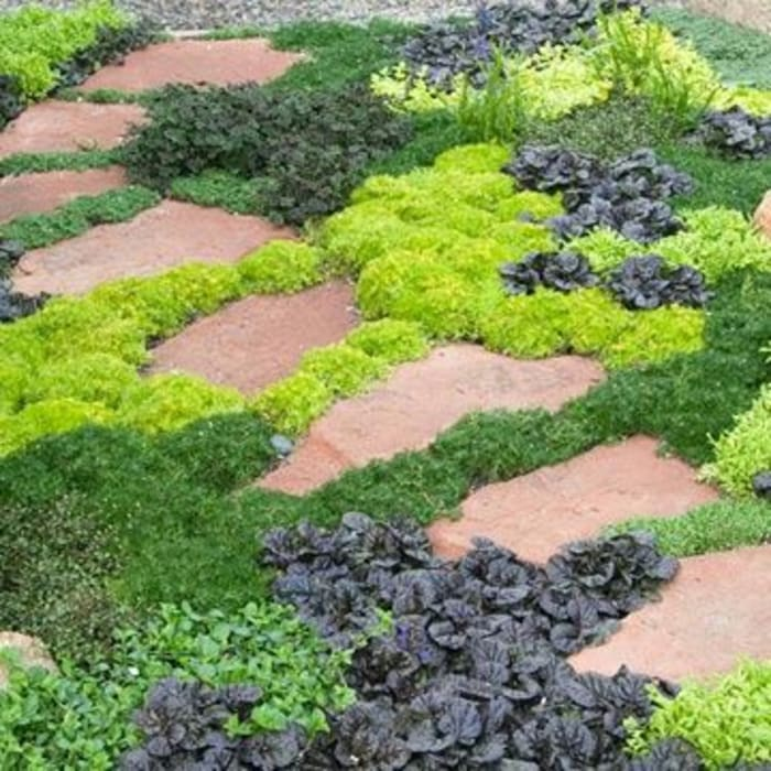 informal pathways:  Garden by Town and Country Gardens