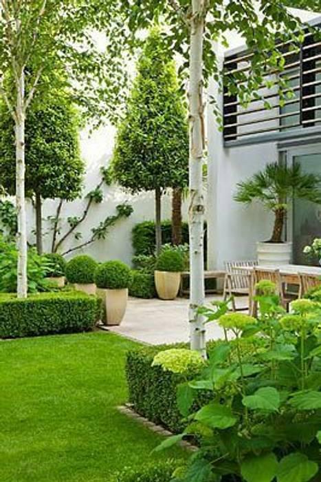 formal garden design: modern Garden by Town and Country Gardens