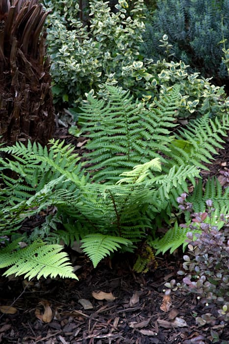 Fern:  Garden by Earth Designs