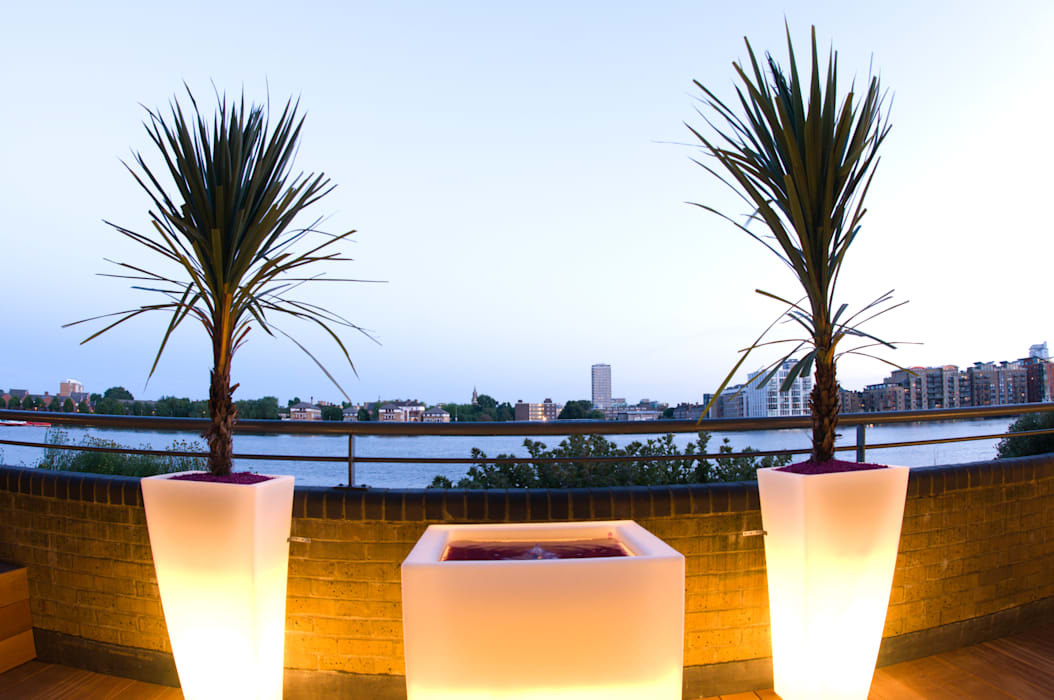 Illuminated planters with cordaylines:  Garden by Earth Designs