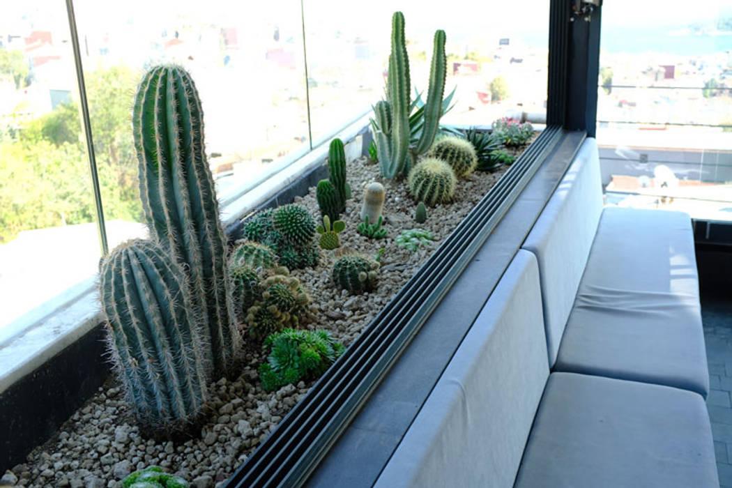 Jardin De Rocaille De Style Par Terraqua Design Homify