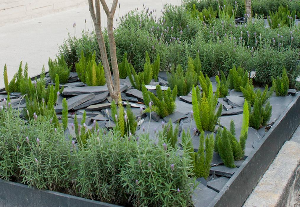Hábitas Mediterranean style garden Slate Green