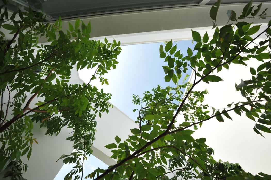 DUY HOUSE Vườn phong cách hiện đại bởi NBD ARCHITECTS Hiện đại