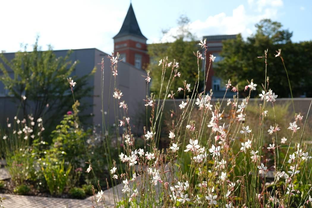 Prachtkerze: moderner Garten von guba + sgard Landschaftsarchitekten
