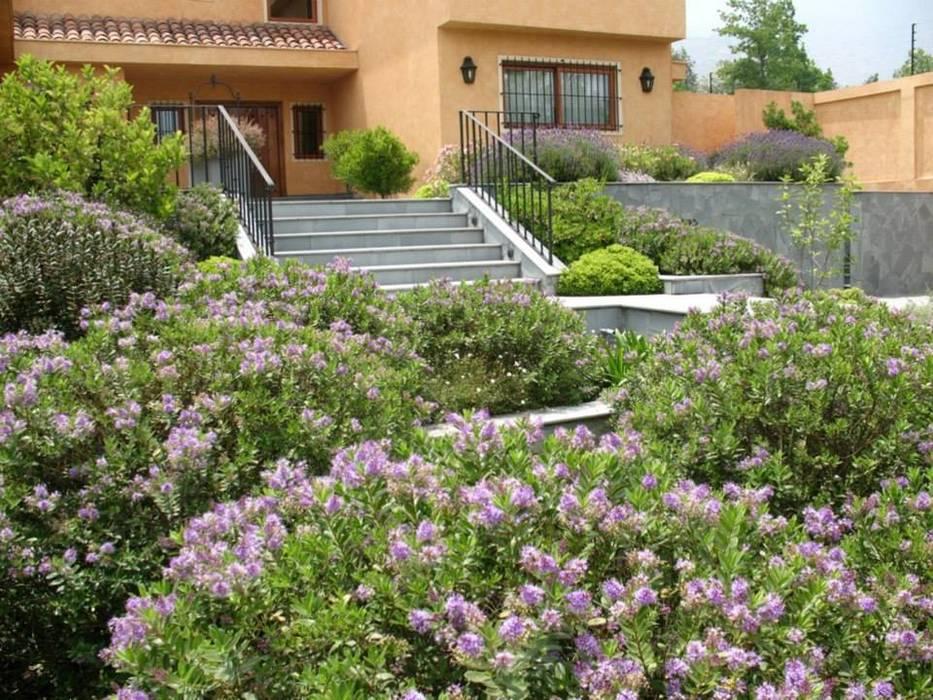 Veronicas buxifolias que dan color al antejardín. Jardines de estilo clásico de Aliwen Paisajismo Clásico