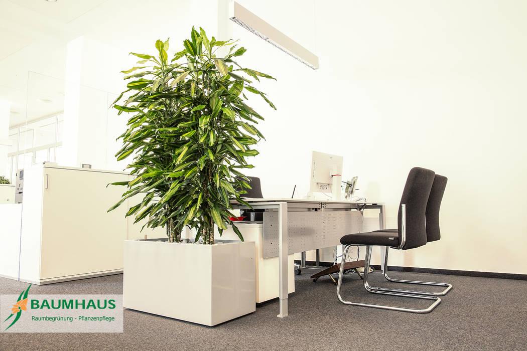 Pflanzen Der Ideale Raumteiler Kongresscenter Von Baumhaus Gmbh